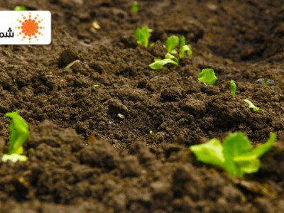 مبيدات الآفات الزراعية